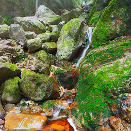 Mammoth by Juan Wernecke - Landscapes Forests ( exposure, 5d mk ii, canon, southern peninsula, juan wernecke, mountain, wood, waterfall, plants, moss, rock, hiking, photography, 10-20mm, love, colour, nature, sigma, skeleton gorge, dark, wonder, light, juan, western cape, water, orange, green, happiness, forest, scenic, log, cape town, table mountain, color, silence, western, landscapes, daylight, mist, peninsula )