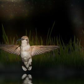 Night Hummer by Charlie Alolkoy - Illustration Animals ( bird, reflection, grass, hummingbird, night )