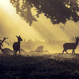 Morning Dew by Jackie Goodwin - Landscapes Sunsets & Sunrises ( animals, nature, landscape )