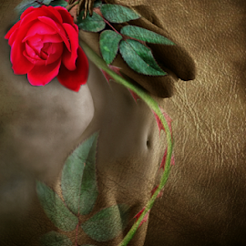 RED ROSE  by Carmen Velcic - Digital Art People ( body, girl, nude, woman, roses, she, lady, digital, people, torn )