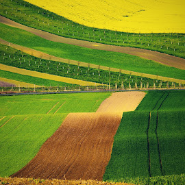 by Antonín Vystrčil - Landscapes Prairies, Meadows & Fields ( field, moravia, crech republic, diagonals, green, waves, prairies, czech, path, czech republic, tourism, yellow )