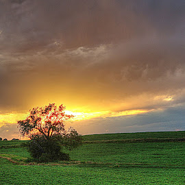 by Karen McKenzie McAdoo - Landscapes Prairies, Meadows & Fields