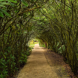 Tree Tunnel  by Jolyon Vincent - Landscapes Forests