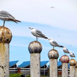 by Carolyn Taylor - Animals Birds (  )