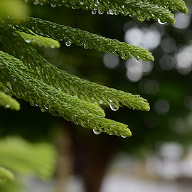 by Sathyanarayanan Shanmugam - Nature Up Close Leaves & Grasses