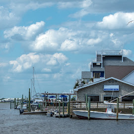 Ocean Front by Thomas Shaw - Landscapes Waterscapes ( water, clouds, post, wood, boats, white, ocean, house, feathers, pelican, north carolina, carolina beach, bird, sky, blue, pier, animal )
