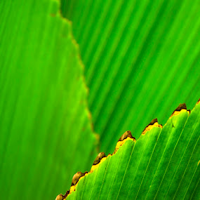 Green Leaf by John Souza - Nature Up Close Leaves & Grasses ( plant, wood, nature, color, california, green, background, plants, brown, yellow, vegetation, natural )