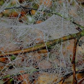 by James Hunt - Nature Up Close Webs