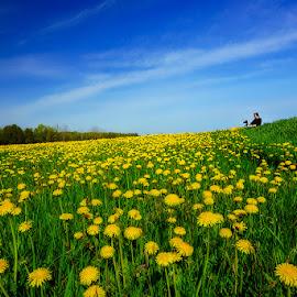 by Dragan Milovanovic - Landscapes Prairies, Meadows & Fields
