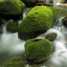 BC-2014 P6217555 by Ross Boyd - Landscapes Waterscapes ( mountains, nc, national parks, streams, creeks )