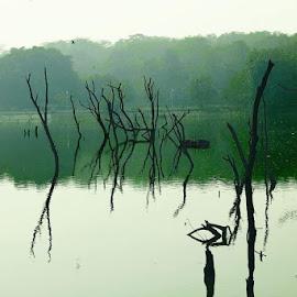 Green Water by Marya Bhardwaj - Nature Up Close Water ( #nature #river #calm #beautiful #reflection,  )
