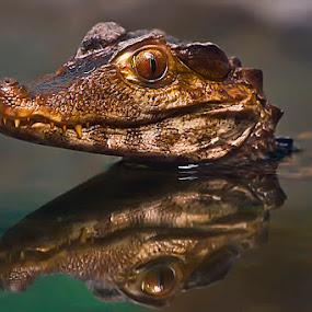 Who me by Cheri McEachin - Animals Reptiles