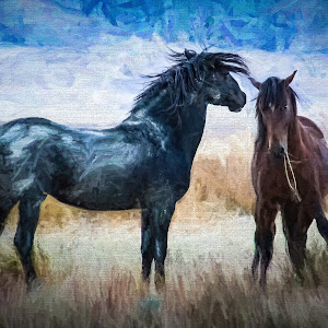 RonMeyers_SLC Wild Horses-2.jpg
