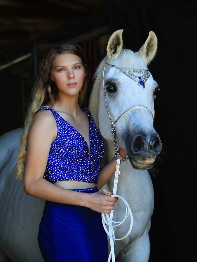 Beauties in Blue by Diana Cantey - Animals Horses ( straight egyptian arabian horses, azaamah, zajaddi egyptian arabians, diana cantey photography, arabian horses,  )