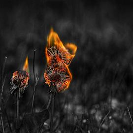 Burning Wishes II  by Todd Reynolds - Digital Art Things