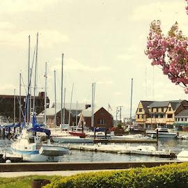 Newport ri by Stephen Deckk - City,  Street & Park  Vistas