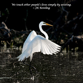 We Touch Other People's Lives Simply By Existing by Jennifer McWhirt - Typography Quotes & Sentences ( animals, nature, quotes, photographybyjenmcwhirt.com, sigma, nikon, typography, birds, egret )