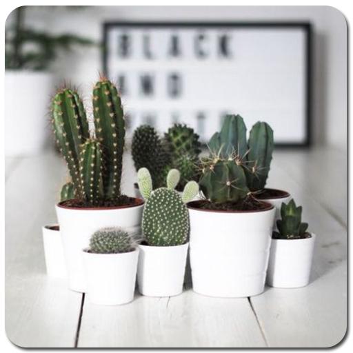 Cactus Plant Home Decor (app)