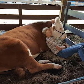 NJ State Fair, Augusta, NJ  8/1/15 by Cameron Clark - Animals Other Mammals