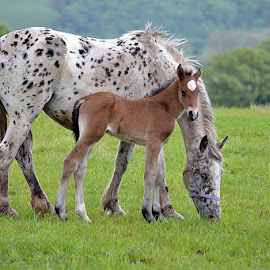 by Terry Gower - Animals Horses