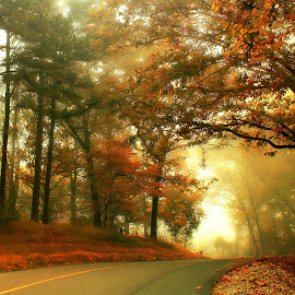 AUTUMN LEAVES by Dana Johnson - Landscapes Forests ( fall colors, fog, autumn, forest, road, landscape )