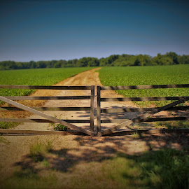 Long Road Behind The Gate by Brant Stevenson - Landscapes Prairies, Meadows & Fields
