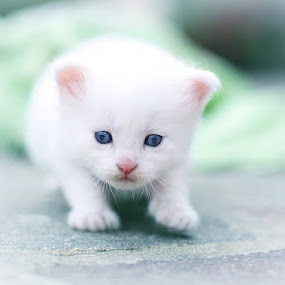 Yang by Viktorija Golubić - Animals - Cats Kittens