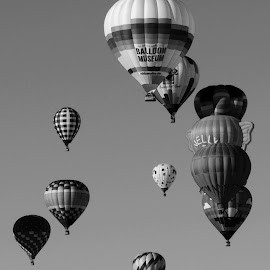 Hot Air Balloons  by Abbey Gatto - Black & White Sports