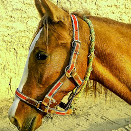 horse by Mohsin Raza - Instagram & Mobile Android