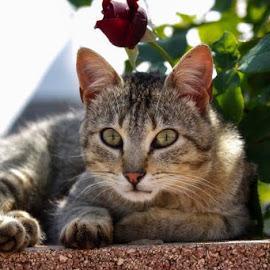 by Domenico Liuzzi - Animals - Cats Portraits
