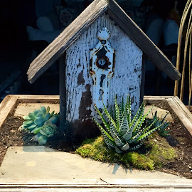 Terrarium  by Lope Piamonte Jr - Artistic Objects Other Objects