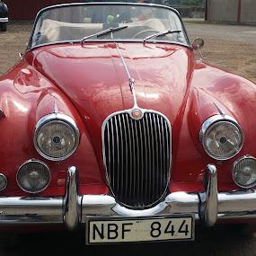 THE AMAZING JAGG by Zoritza  Wejnfalk - Transportation Automobiles ( car, jaguar, zoritza, zozo, wejnfalk,  )