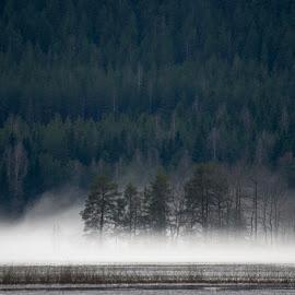 Ihan parasta utua ei kerennyt kuvaamaan .. mutta muutama ok tuli by Marko Paakkanen - Landscapes Forests