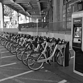 Bike Rental - Seattle Waterfront by Deborah Russenberger - Transportation Bicycles ( bike, `, bw )