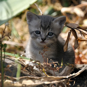 Noa. by Lorraine Bettex - Animals - Cats Kittens