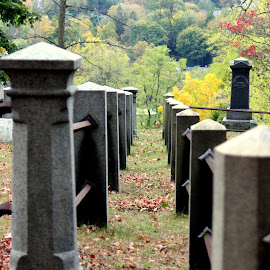 Lined up by Janet Smothers - City,  Street & Park  Cemeteries