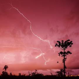 ... by Matheus Dalmazzo - Landscapes Weather ( lightning, tree, araucaria, storm )