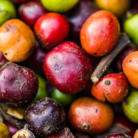 Coffee Beans by Gurucharan Shamji - Nature Up Close Gardens & Produce ( macro, coffee, fruits, drink, seeds, garden )