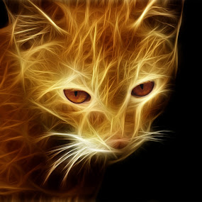 Fire CAt by Baidyanath Arya - Digital Art Abstract ( cat, aryazoness, fire cat, fire )