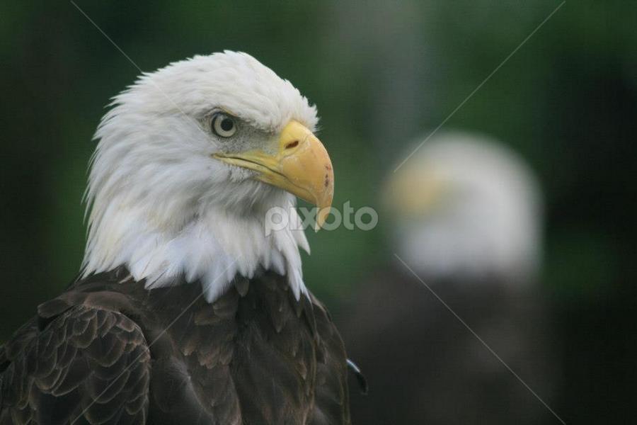 by Elaine Norman - Animals Birds