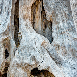 Maelstrom by Jebark Fineartphotography - Abstract Patterns ( abstract, twisted, stump, nature, wood, pattern, tree, tree stump, grain, natural abstract, natural )