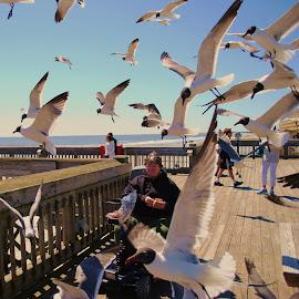 Feeding The Birds  by Prentiss Findlay - City,  Street & Park  Street Scenes ( birds getting bread, woman feeding the birds, feeding the birds, sea gulls, birds on pier )