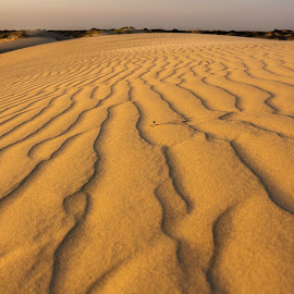 Morning Sands by Casey Doody - Landscapes Deserts ( sand, desert, sand dunes, texture, texas, texures )