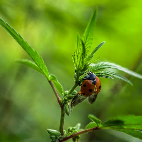 Ladybird by Vishal  Singh - Uncategorized All Uncategorized ( beautiful, pixoto, ladybird, travel, sunlight )