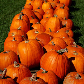 Pumpkin Row by Philip Molyneux - Food & Drink Fruits & Vegetables