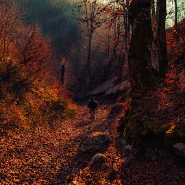 Old mountain forest by Costin Mugurel - Landscapes Forests ( nature, trees, forest, landscape, hiking )