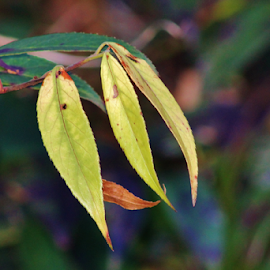 by Terry Linton - Nature Up Close Leaves & Grasses (  )