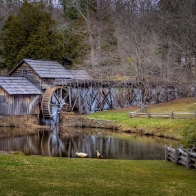 Mabry Mill by Randell Whitworth - Buildings & Architecture Public & Historical ( water, old, wheel, hdr, ducks, public, watermill, pond )