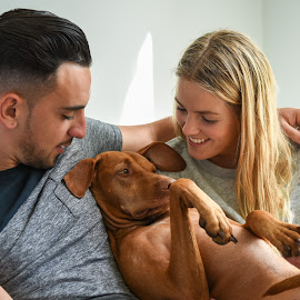 Close-up of smiling couple holding Hungarian Vizsla by NW D - People Couples ( interior, indoors, long, pretty, romance, hispanic, caucasian, gundog, love, magyar vizsla, hungarian pointer, latino, girl, t-shirt, woman, attractive, couple, vizsla, grey, hair, smiling, man, affection, canis lupus familiaris, beautiful, hungarian vizsla, canis familiaris, white, young, blonde, pet, dress, bearded, beard, pointer, handsome, dog, good-looking )