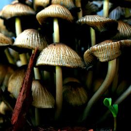 by Nancy Tonkin - Nature Up Close Mushrooms & Fungi